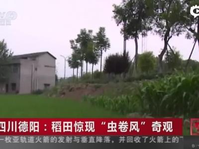"""《中国新闻》四川德阳:稻田惊现""""虫卷风""""奇观"""