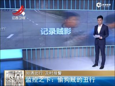 《晨光新视界》如遇此行  及时报警:监控之下——偷狗贼的丑行