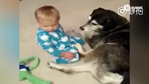 困成狗的小宝宝 晃晃悠悠推到汪星人