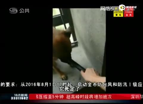 深圳男子虐狗取乐 将血腥视频发网上炫耀