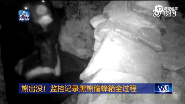 熊出没!红外相机记录黑熊偷蜂箱全过程