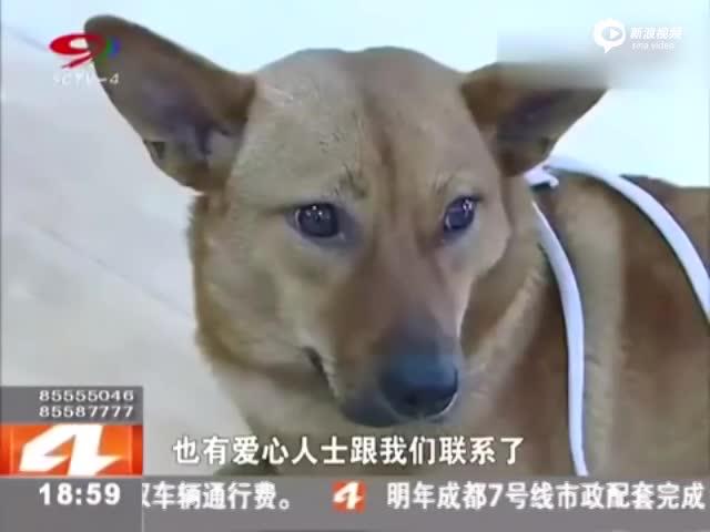 男子拍摄虐狗视频牟利 被当街裸体群殴