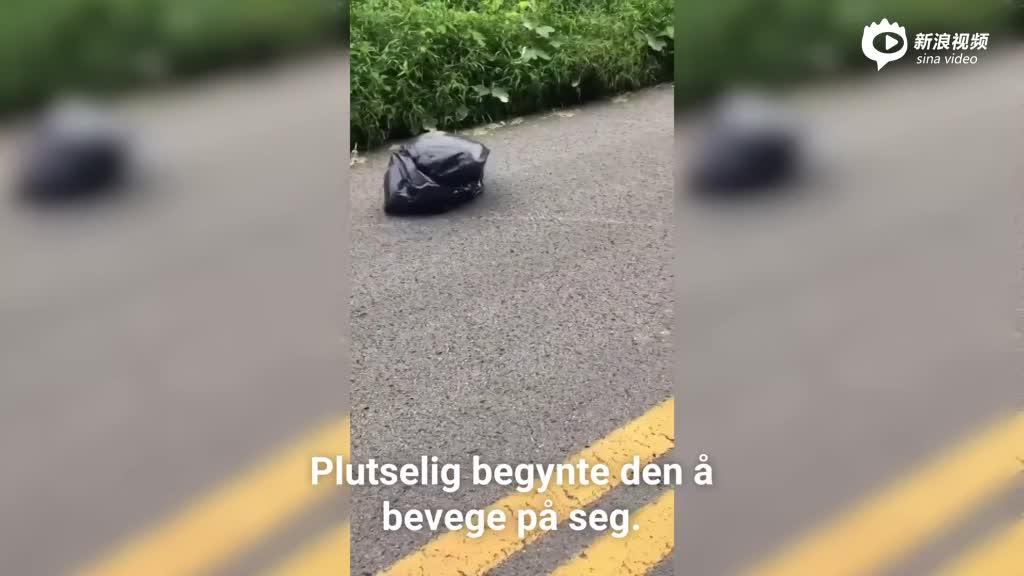 女子路边发现会移动塑料袋 里面藏被遗弃小狗