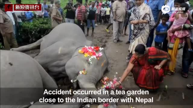 小象被电线缠住母象心急营救 双双触电身亡