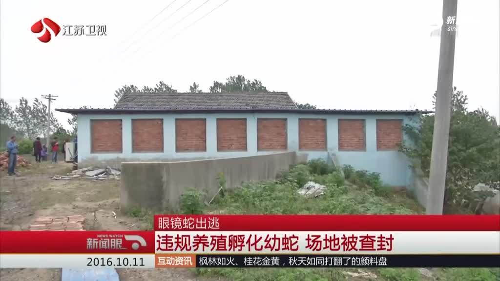 南京50条眼镜蛇逃逸 百余村民地毯式搜索