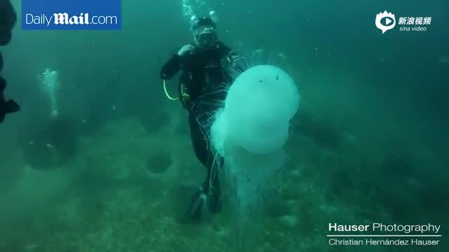 墨西哥潜水员遇巨型水母 场面惊险刺激