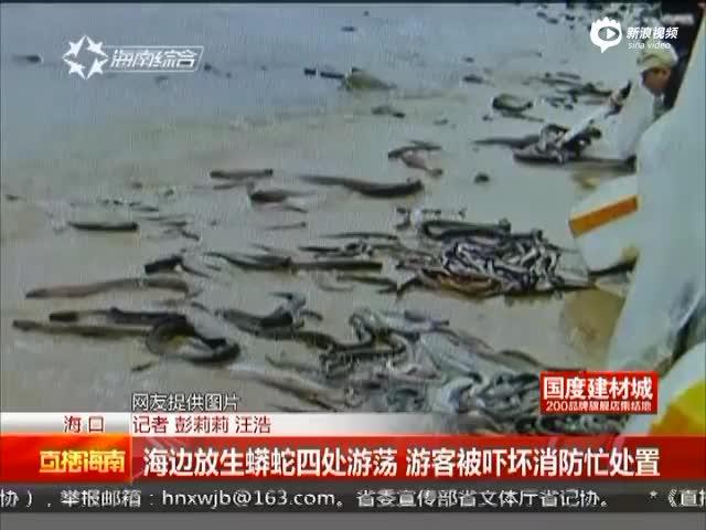 现场:市民海边放生蟒蛇 消防员接警连夜活捉