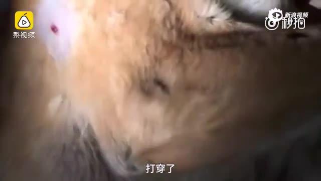 保安枪杀宠物狗 小女孩抱着尸体痛哭:你起来