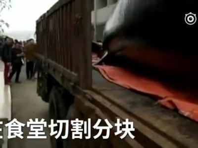 公司买8吨重大鲸鱼分块宰杀腥