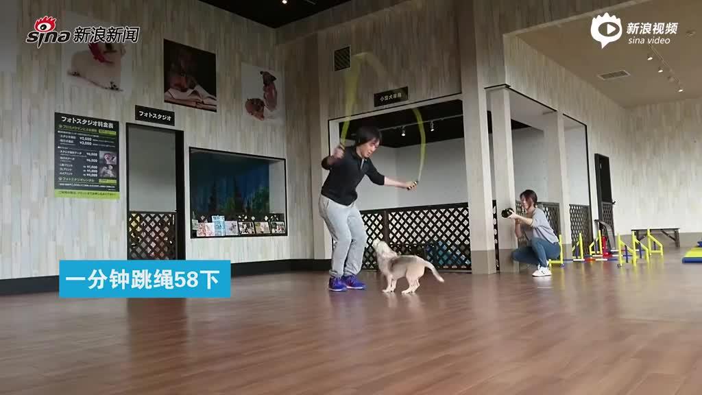 日本比格犬创下多项世界纪录 可一分钟跳绳58下