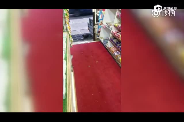 吃货小松鼠成大盗 狂偷超市40盒巧克力
