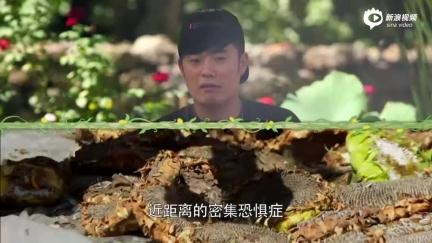 视频:《生活》陈赫连番搞事情 偷懒撒娇齐上阵