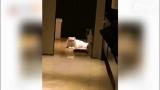 视频:李晨健身房练肌肉 范冰冰家里泡澡逗猫