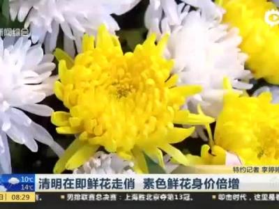 清明在即鲜花走俏 素色鲜花身价倍增