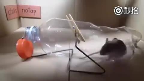老鼠折纸步骤图解大全