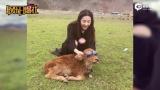 """视频:刘亦菲给小牛戴墨镜 自称""""小牛犊和傻大姐"""""""