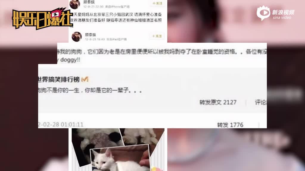 刘亦菲后院养30只流浪猫