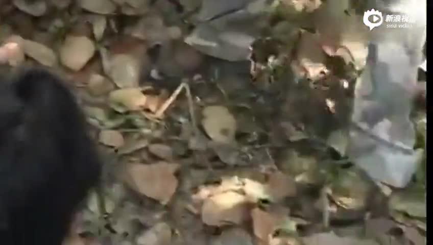 小伙冒死给眼镜王蛇喂水 之后一幕众人惊呆了
