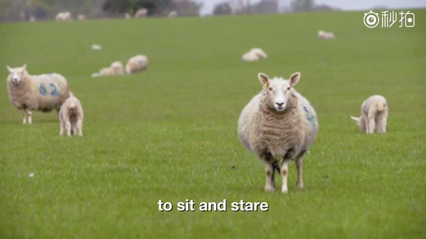 羊的解剖结构图及名称