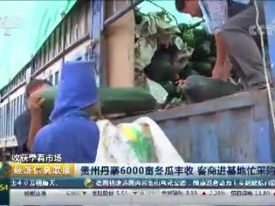 [经济信息联播]收获季看市场:贵州丹寨6000亩冬瓜丰收 客商进基地忙采购