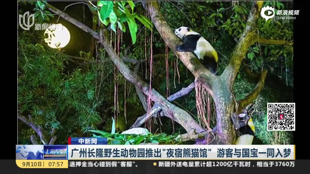 """中新网:广州长隆野生动物园推出""""夜宿熊猫馆"""" 游客与国宝一同入梦"""