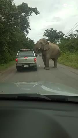 小型卡车遭到饥肠轱辘的大象袭击
