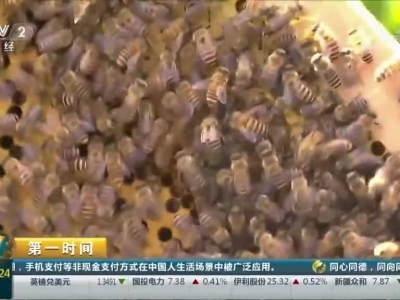 """[第一时间]贵州贵安:蜂蜜成熟有市场 村民算起""""甜蜜账"""""""