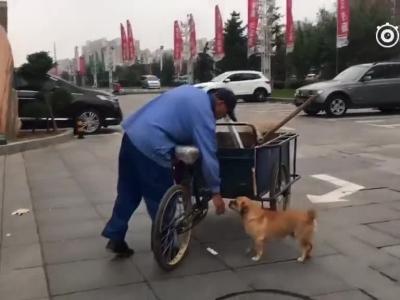 狗狗帮主人做保洁3年未间断