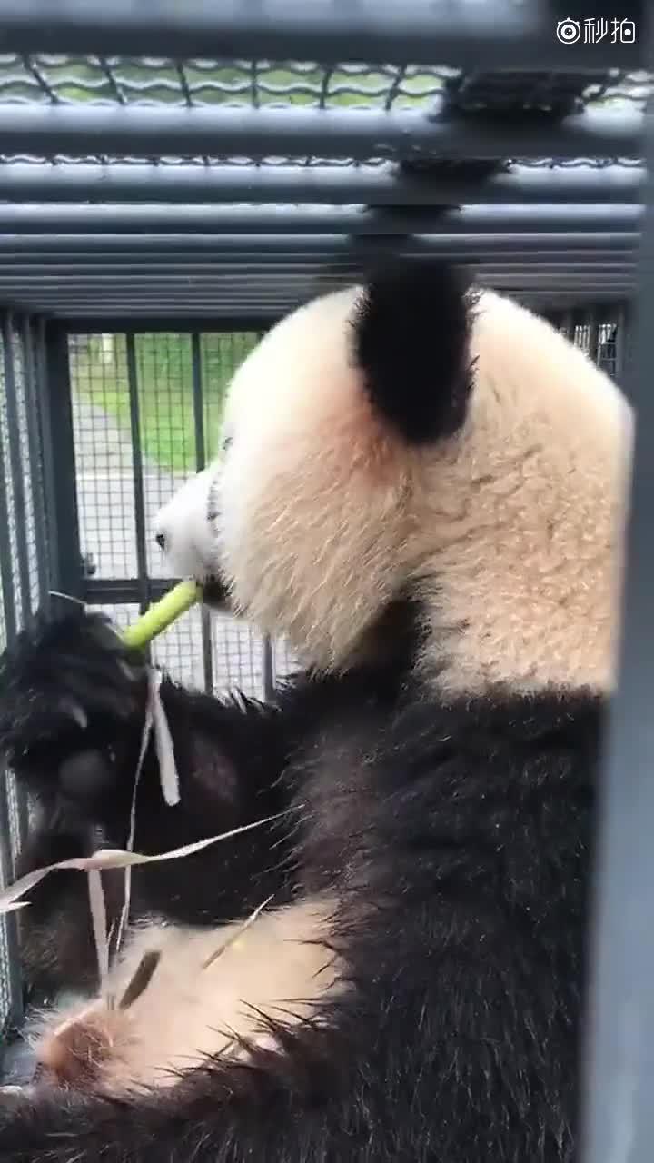 剪熊猫的详细步骤图解