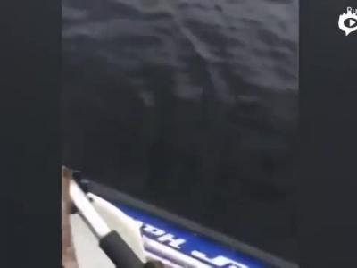 """渔夫湖中捕鱼 没想到""""捞""""上来两只小熊"""