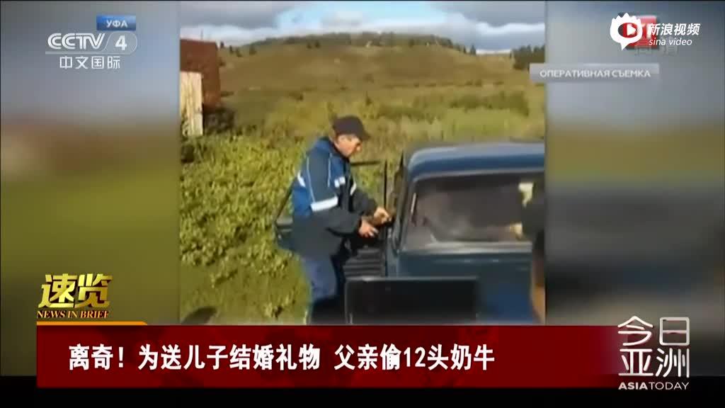 实拍父亲用轿车偷12头奶牛 为送儿子结婚礼物