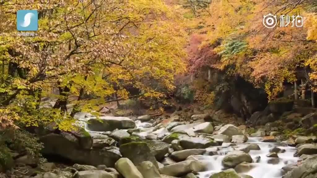 标签: 简介: 四川巴中南的光雾山景区拥有830平方公里的红叶景观带,其图片