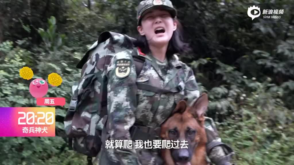 视频:《奇犬》张馨予身体突发异样警犬伙伴暖心相助