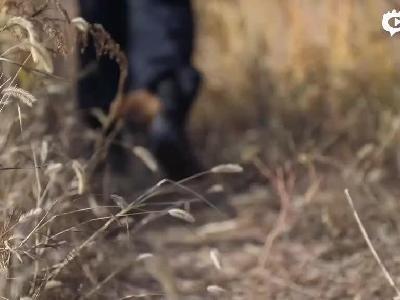 黄河三角洲保护区民警:巡逻上百公里守护珍稀动植物