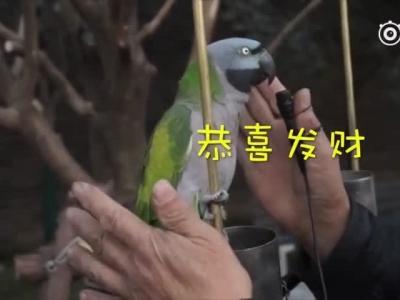 37岁鹦鹉会讲英语 相亲千次仍单身
