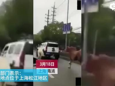 上海马路上有人开悍马车遛两匹马?警方已介入调查