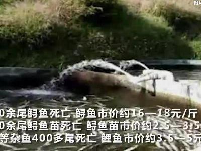 实拍:广东又一渔场万尾鲟鱼死亡 警方初判系投毒_1523295780571.mp4
