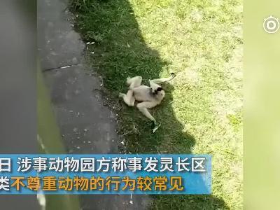 视频:特殊教育?大妈动物园内对长臂猿吐口水 教孙子一起