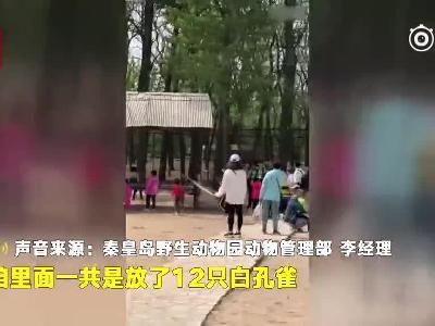 视频丨白孔雀遭小孩追逐拔毛 家长一旁围观