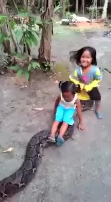 视频丨小女孩将世界最大蟒蛇当坐骑 网友纷纷表示太