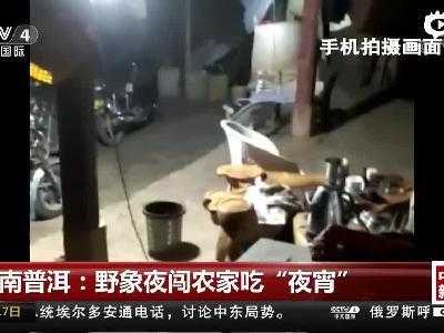 """云南普洱:野象夜闯农家吃""""夜宵"""""""