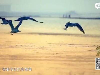 """《好好学习》访吉林西部 探""""河湖连通""""之魅"""