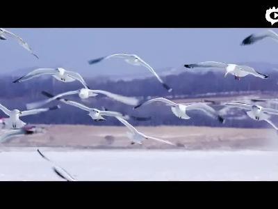龙山湖上群鹰会