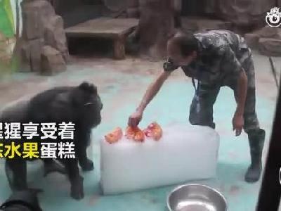 """郑州动物园里萌宠们""""花式降温"""""""