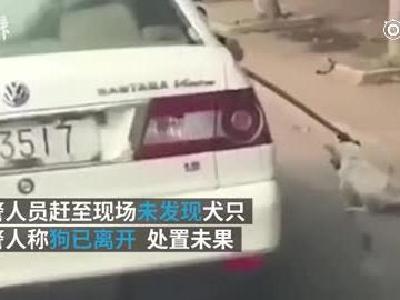 捕乱窜流浪狗用警车缓行带离,警方致歉