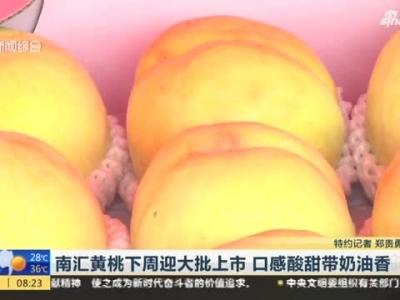 视频:南汇黄桃下周迎大批上市 口感酸甜带奶油香