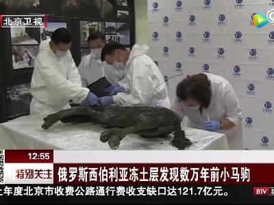 俄罗斯西伯利亚冻土层发现数万年前小马驹