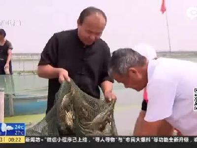 阳澄湖大闸蟹试捕 惊现八两多蟹皇