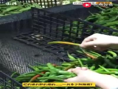 国庆陪妈妈买菜,湘妹子先来一斤辣椒