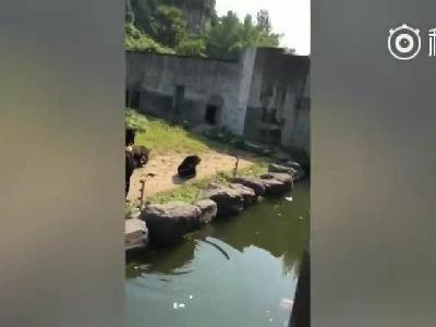 视频:游客不停朝动物投食 猴子被辣条辣到崩溃